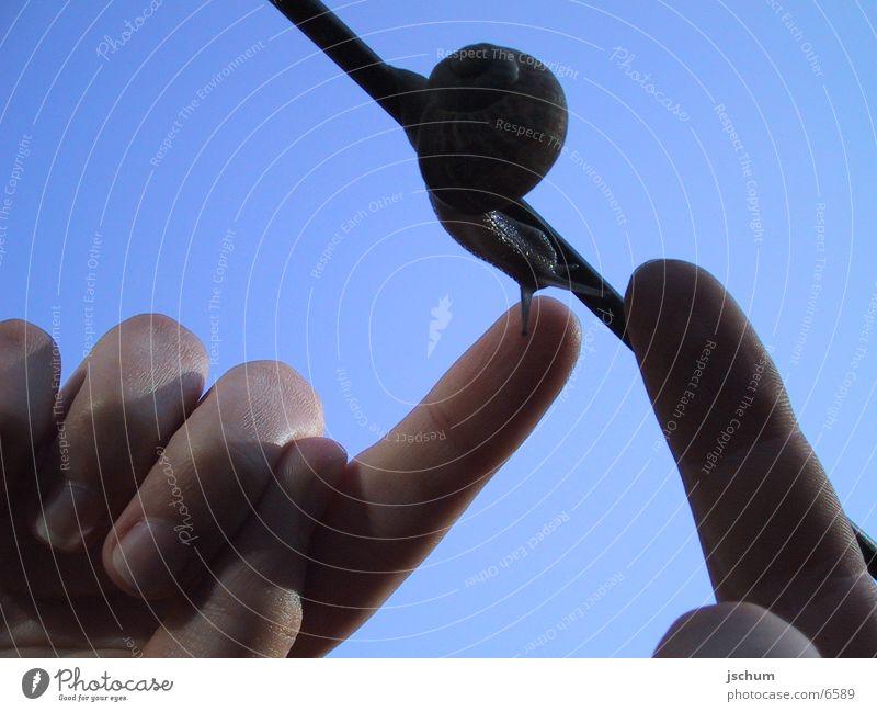 Snails Contact Animal Nature