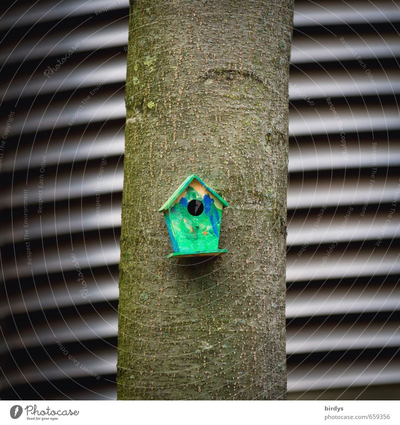 aviary Tree Tree trunk Birdhouse Nesting box Exceptional Small Funny Graphic Cute Colour photo Exterior shot Deserted Day Shallow depth of field