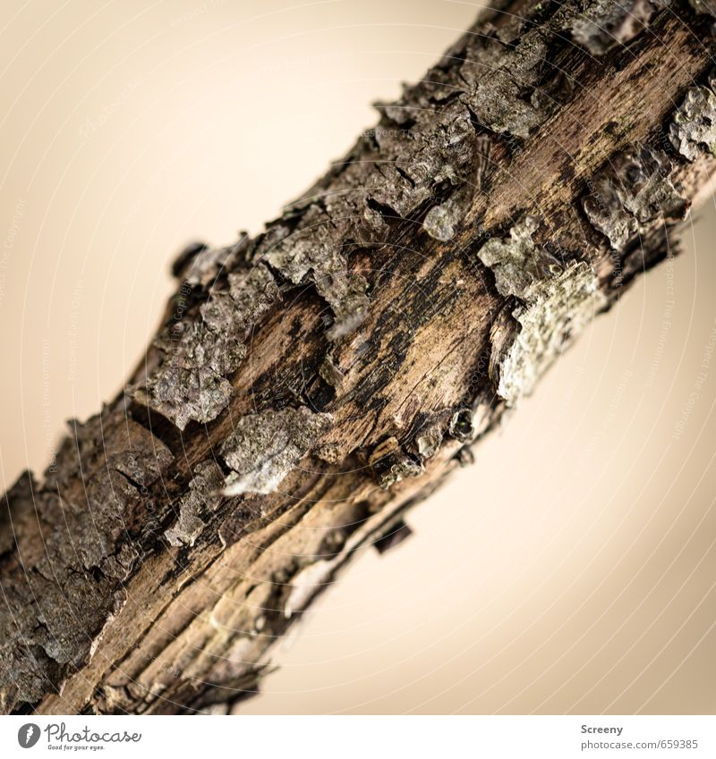 transverse position Nature Tree Wood Brown Environment Decline Transience Tree bark Weathered Branch Across Structures and shapes Colour photo Detail Deserted