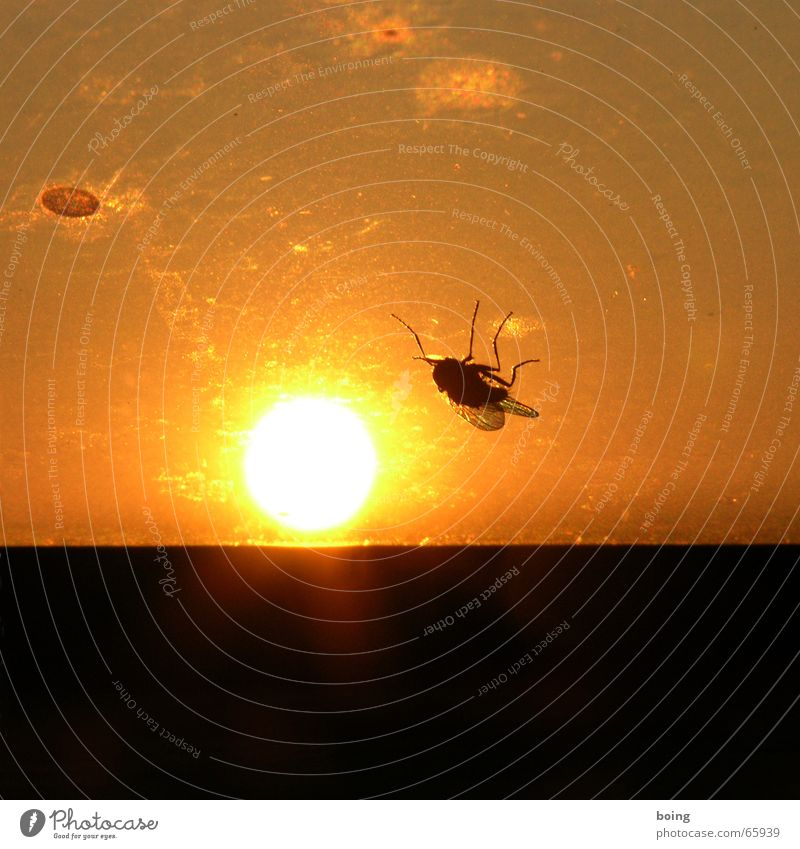 Fly Insect Transience Sunbathing Sunset Duel Tanning bed Go crazy