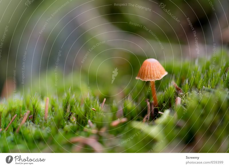 Nature Green Plant Calm Forest Life Spring Small Happy Brown Earth Growth Delicate Serene Moss Mushroom