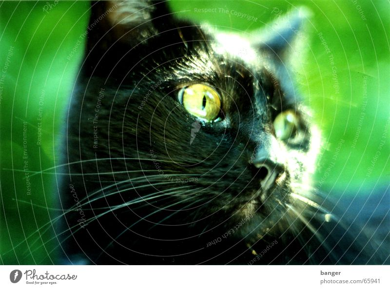 Oh, God Cat Facial hair Black Green Pet Panther Bird Cuddly toy Meow Summer Leaf Park purple Garden