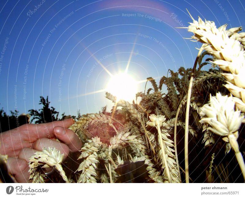 Sky Hand Sun Summer Warmth Lighting Physics Hot Grain Thin Dry Agriculture Harvest Farmer Grain Organic produce