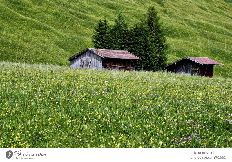 Tree Flower Green Summer Vacation & Travel Calm Relaxation Meadow Mountain Hiking Hut