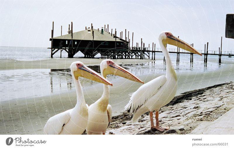 Ocean Beach Nutrition Animal Sand Bird Coast Fish Group of animals Africa Desire Longing Appetite Lust Gravel Desire