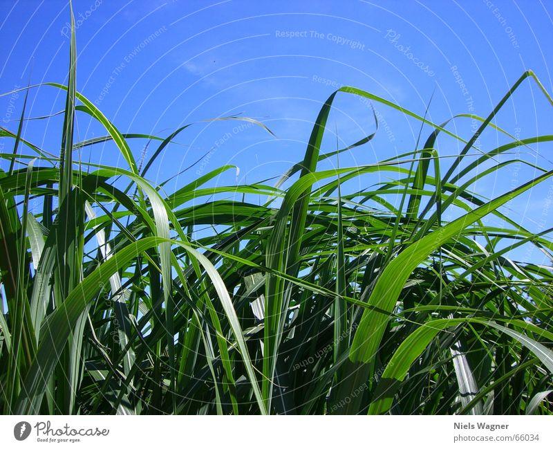 Sky Green Blue Plant Meadow Wind Bushes