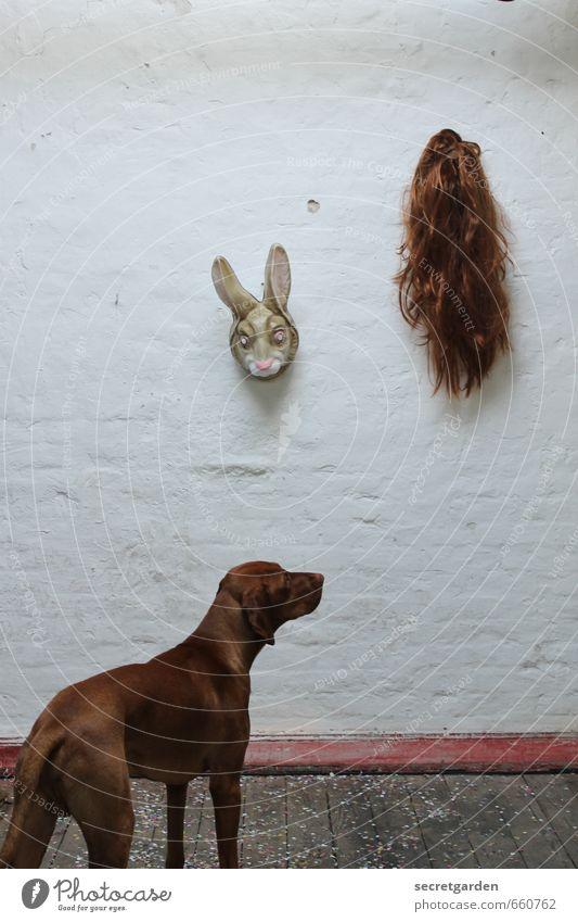 STUDIO TOUR | the agony of choice. Animal Pet Dog 1 Funny Trashy Brown White Curiosity Irritation Mask Hare & Rabbit & Bunny Wig Wall (building) Whimsical Hang