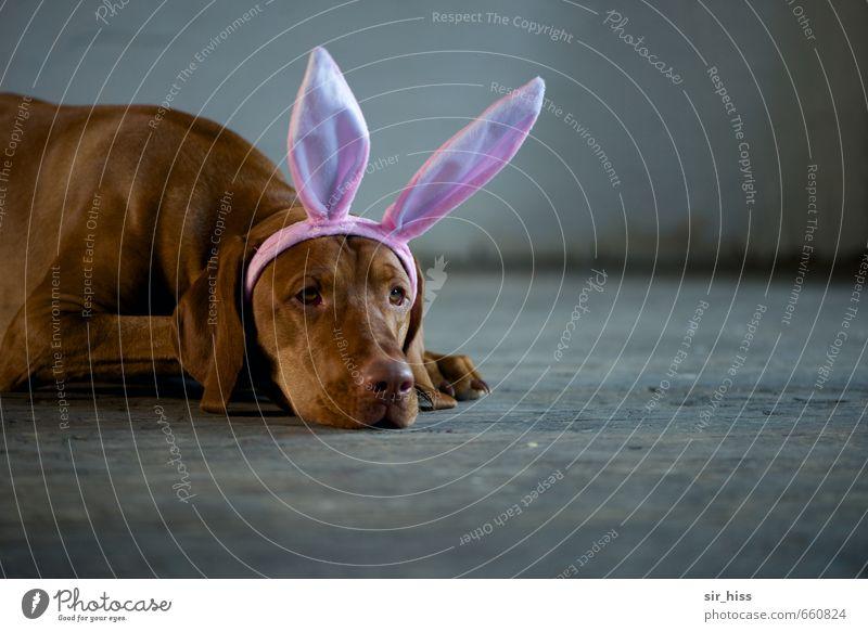 Dog City Sadness Gray Brown Pink Infancy Wait Esthetic Cute Cool (slang) Ear Longing Whimsical Bizarre Surprise