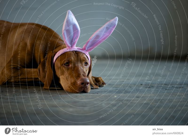 STUDIO TOUR | Easter Doggy Paw Looking Sadness Wait Esthetic Brash Cute Brown Gray Pink Cool (slang) Purity Humble Boredom Longing Indifferent Bizarre Infancy