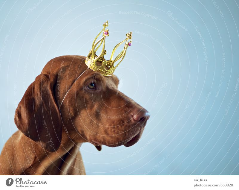 Dog Blue Beautiful Head Brown Elegant Gold Authentic Success Crazy Wait Uniqueness Cute Sign Touch