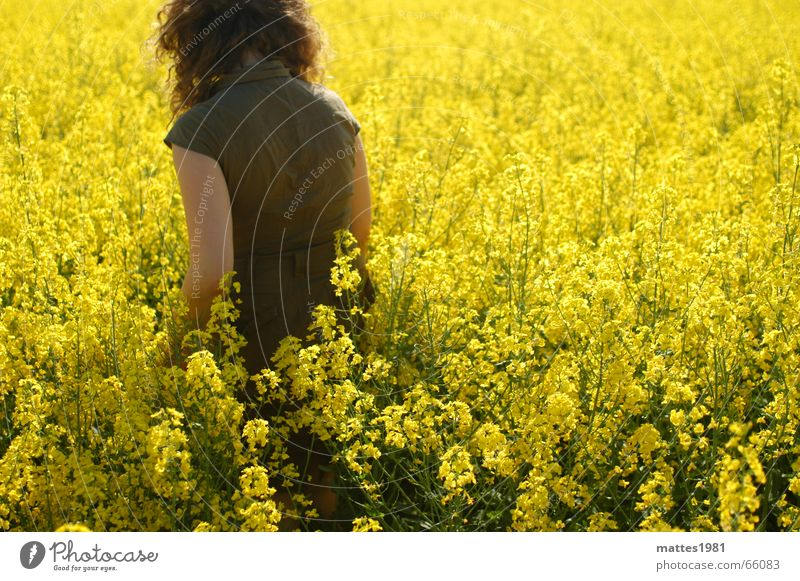 Summer Calm Loneliness Yellow Lamp Field Break To go for a walk Village Harvest Farmer Relationship Escape Canola Wiesbaden