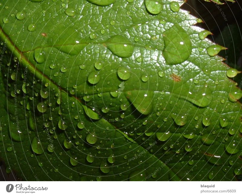 leaf Leaf Photographic technology Drops of water