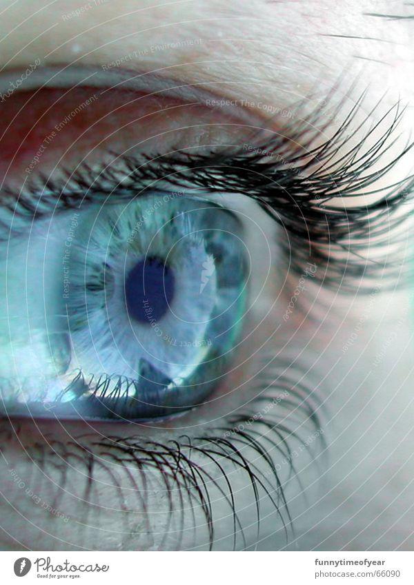 Sky Eyes Style Eyelash