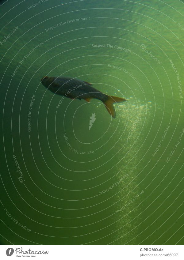 Water Green Ocean Animal Lake Fish River Living thing Brook Air bubble Water wings Algae Habitat