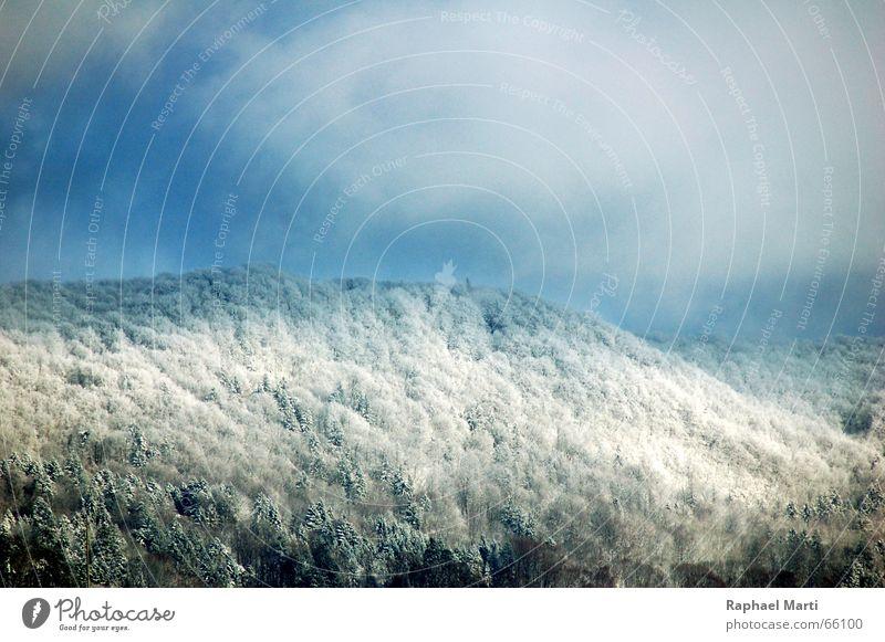 Snowy Laegern Winter Forest Switzerland Mountain Sky Alps Landscape
