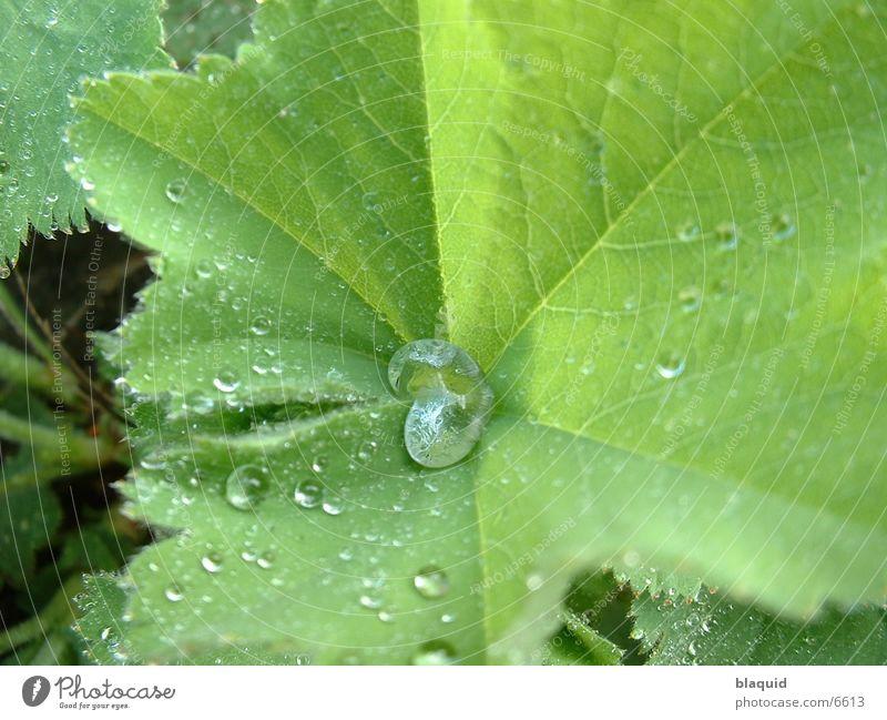 Drop on leaf Leaf