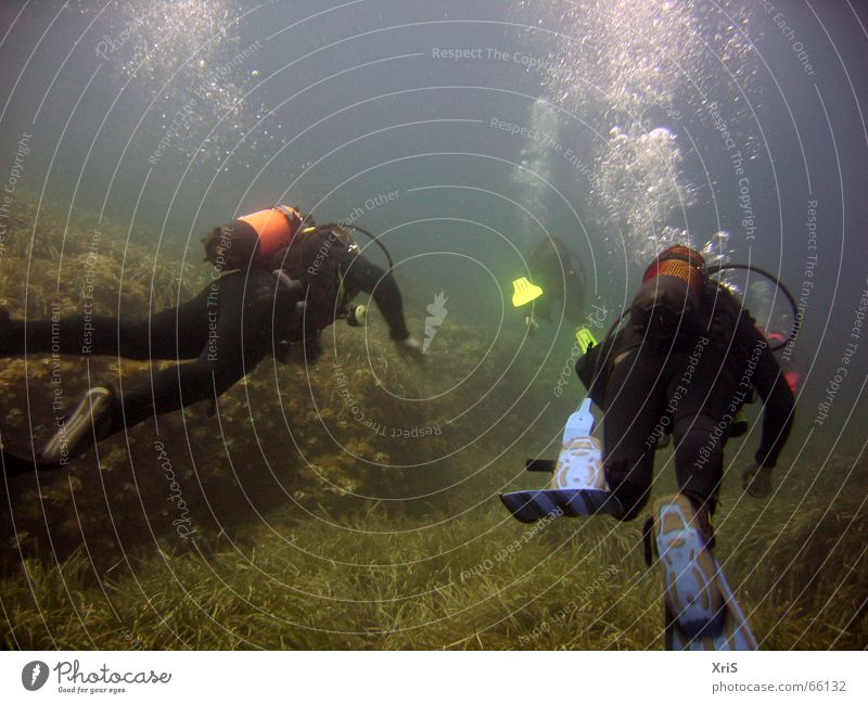Green Blue Dive Underwater photo Air bubble Water wings Diver Algae Diving equipment