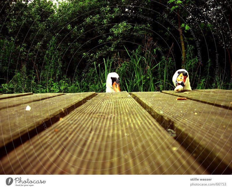 twins Swan Footbridge Bushes Tree Feeding by the water Nutrition
