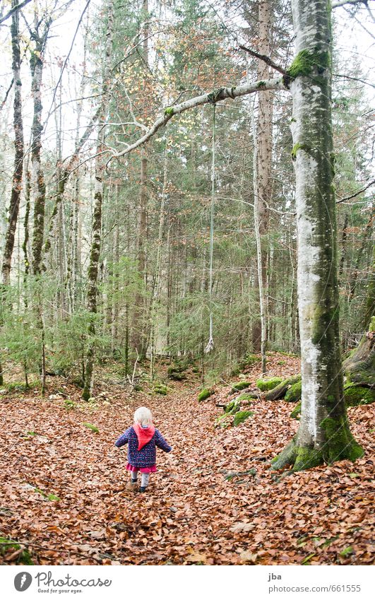 Human being Child Nature Plant Tree Girl Leaf Forest Life Feminine Autumn Freedom Fog Gloomy Infancy Hiking