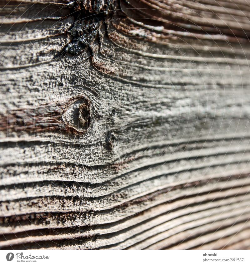 wood Nature Tree Wooden board Line Brown Knothole Wood grain Colour photo Subdued colour Exterior shot Abstract Pattern Structures and shapes Copy Space right