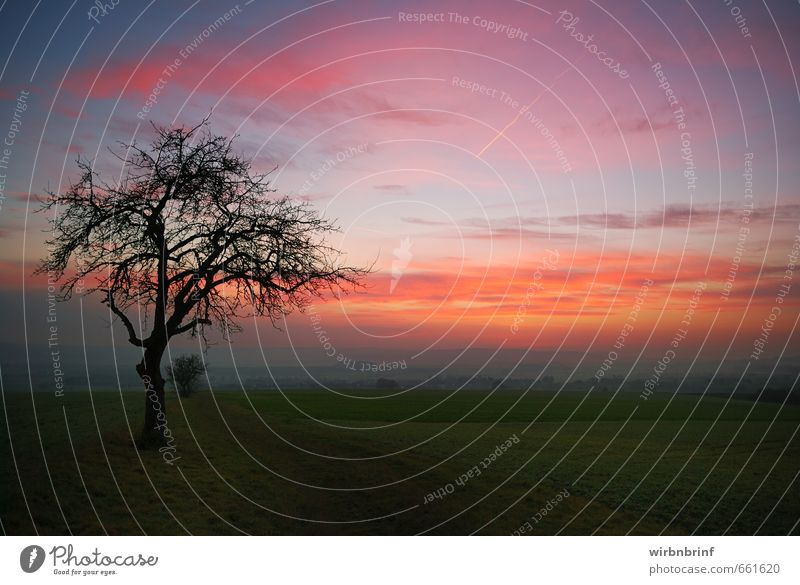 At dusk Environment Landscape Clouds Sunrise Sunset Autumn Tree Field Deserted Lanes & trails Relaxation Infinity Emotions Calm Colour photo Exterior shot