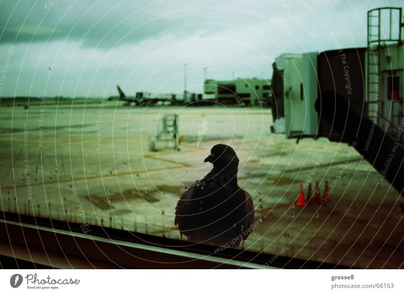 departure Pigeon Window Runway Dark Bird Miami Airport