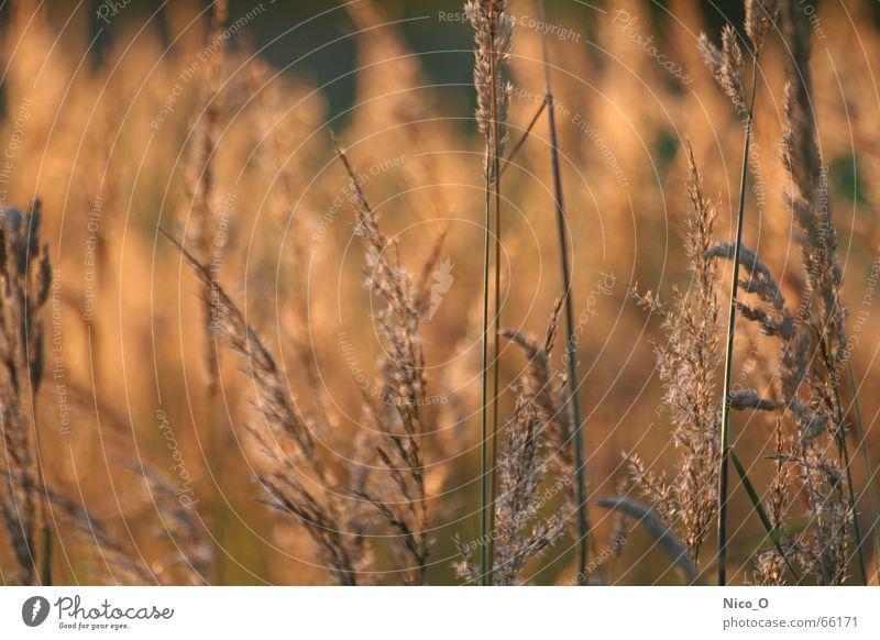 Field Grain Cornfield National Park Center point