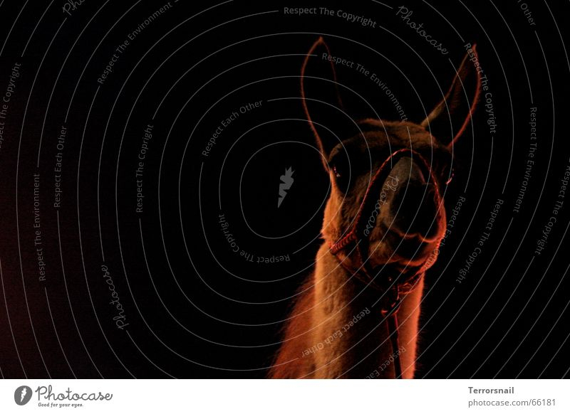 A kingdom for ... Curiosity Watchfulness Large Back-light Animal Circus Circus ring Sawdust Shows Halter Calm Graceful Elegant Beautiful Animalistic Peace