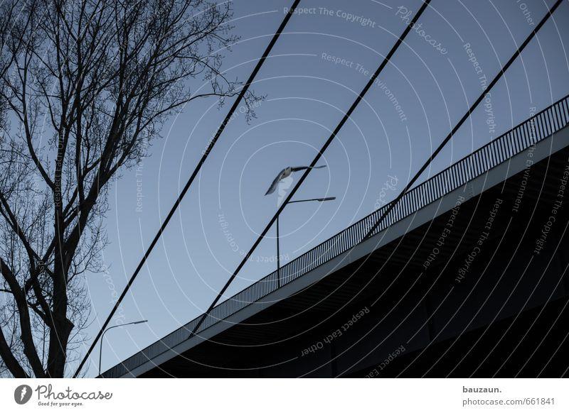 Sky Blue City Tree Animal Winter Street Autumn Lanes & trails Line Bird Flying Beginning Bridge Wing Street lighting