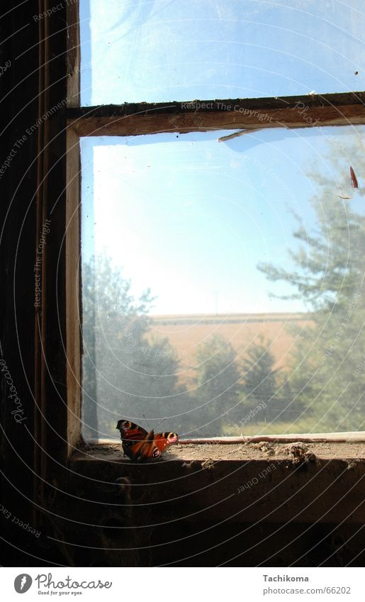 The Lone Smasher Butterfly Loneliness Window Captured Insect Grief Tree Broken Dust Sadness Old Dirty