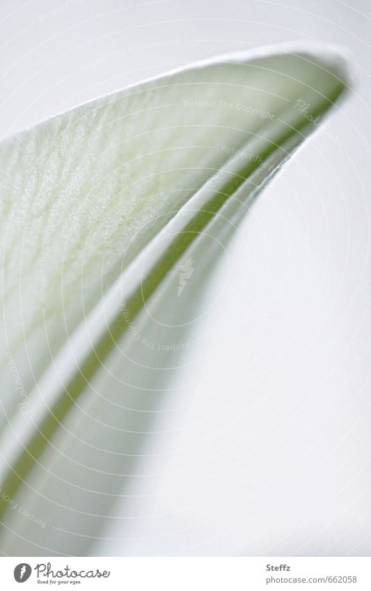 Nature Green White Plant Spring Blossom Bright Esthetic Romance Delicate Tulip Blossom leave Fine Rachis Spring fever Spring flower