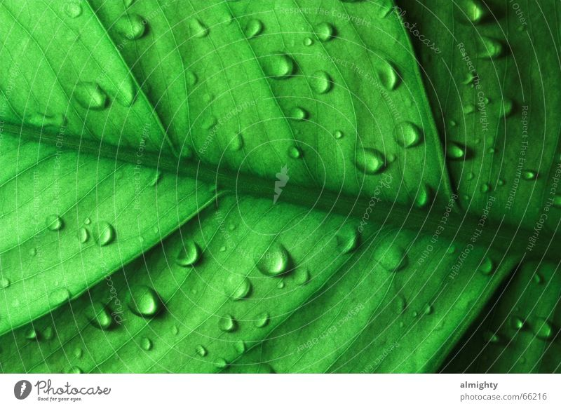 Green Leaf Lighting Drops of water Glimmer X-ray vision