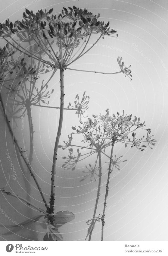 fragile Flower Plant Blossom Meadow Ant Black White Easy Delicate Ease Faded Garden Nature Shadow Black & white photo Bright