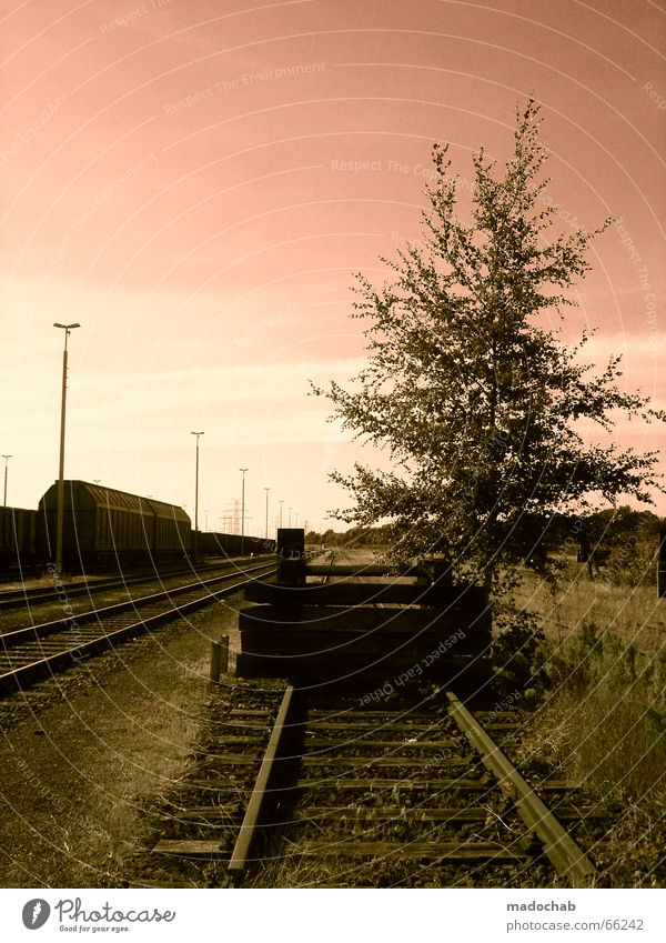 ENDSTATION IDYLLE | rails nature romance sunset Railroad Railroad tracks Tree Lantern Romance Grass Meadow Sky wagon Nature Idyll Loneliness