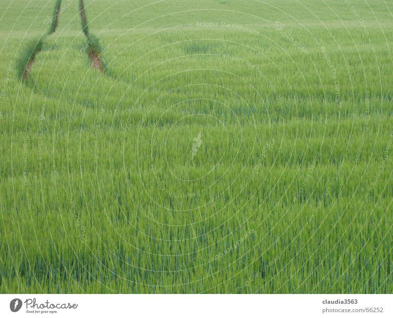 Nature Green Far-off places Lanes & trails Field Horizon Infinity Grain Narrow gauge railroad