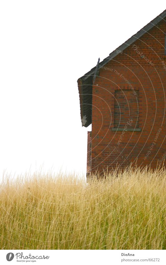 brick house Summer House (Residential Structure) Nature Grass Window Brick Green Red White Idyll Blade of grass blades bricks Partially visible Colour photo