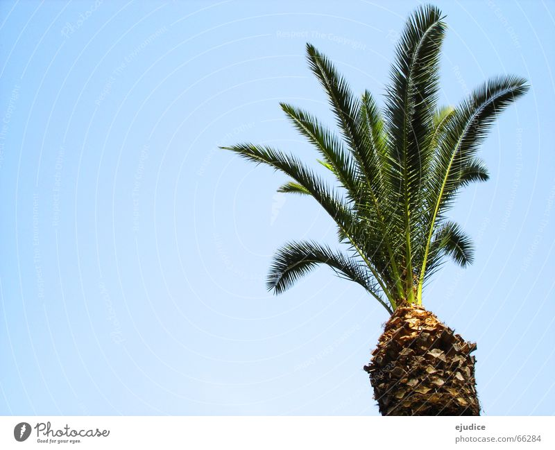 la.palma Palm tree Green Vacation & Travel Pompei Italy Tree Nature Sky Treetop