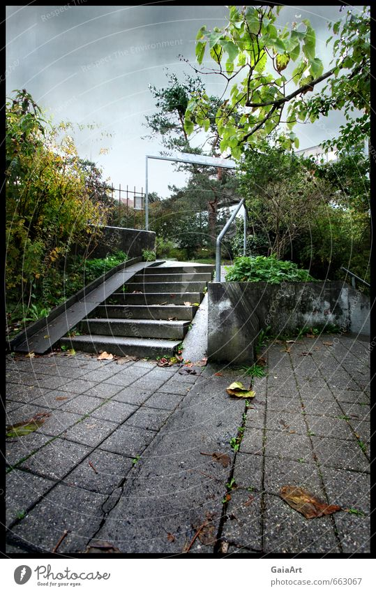 The stairs Environment Nature Sky Clouds Autumn Bad weather Park Town Places Gate Stairs Stone Movement Going Crouch Growth Dirty Creepy Cold Gray Green Moody