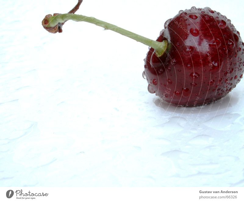 Water White Tree Red Summer Cold Healthy Wet Drops of water Fresh Sweet Fruit Hot Anger Candy Harvest