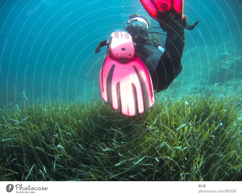 Green Blue Red Underwater photo Dive Air bubble Water wings Diver Algae Diving equipment