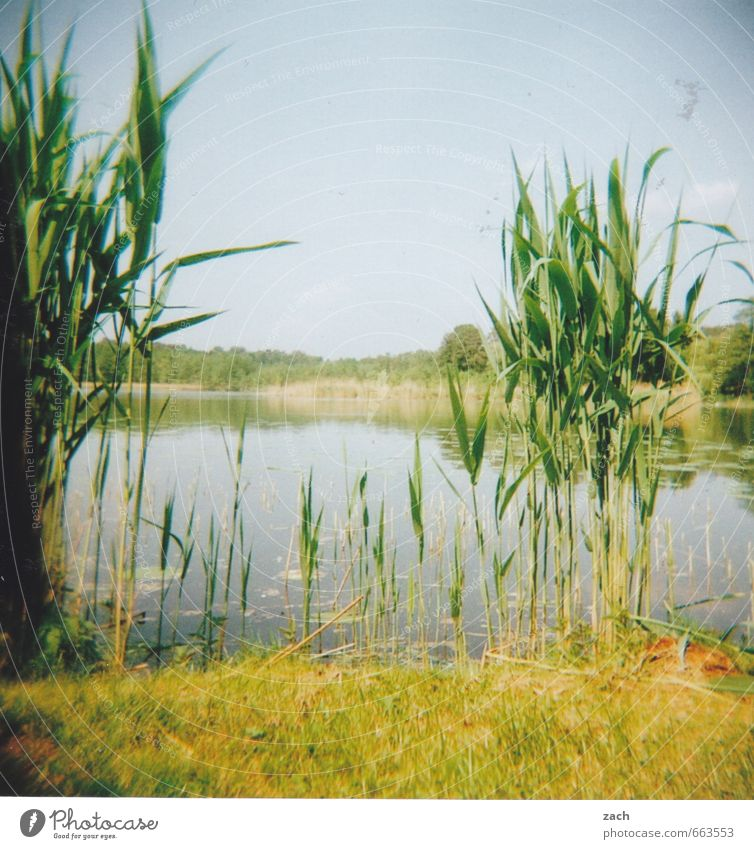 Brandenburg, gotten Trip Summer Summer vacation Swimming & Bathing Environment Nature Plant Water Sky Cloudless sky Spring Grass Foliage plant Common Reed
