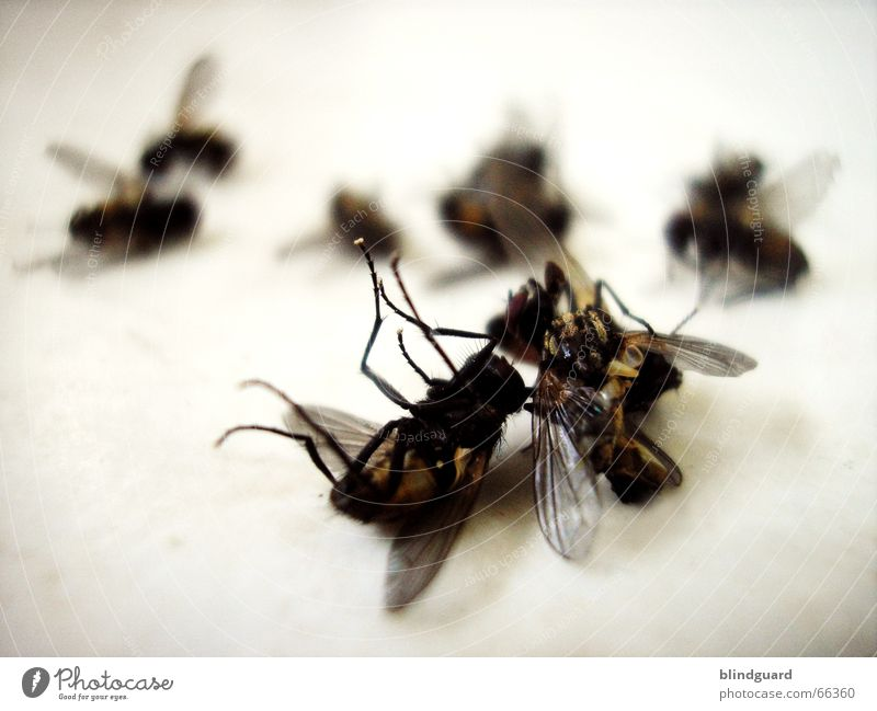 Death Legs Flying Lie Wing Insect Evil Calculation Beat Buzz Remembrance Sunday Crematorium