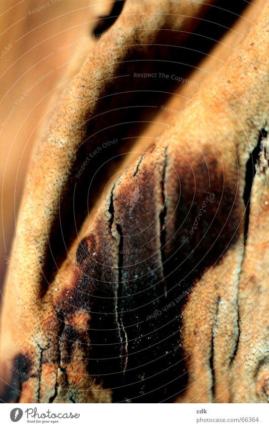 Nature Beautiful Colour Dark Warmth Bright Brown Skin Wrinkles Deep Leather Crack & Rip & Tear Surface Beige Tree bark Sheath