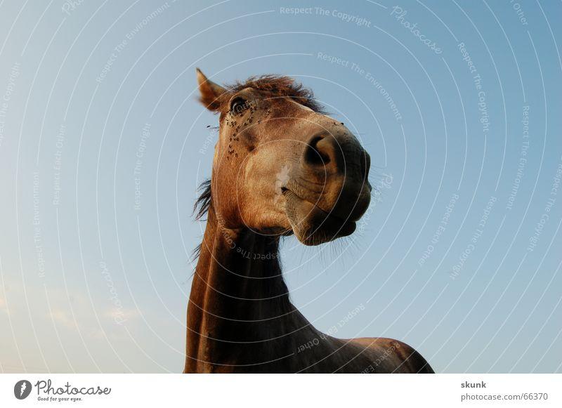 Pawpaw :D Horse Curiosity Nostrils Mane Peaceful Sky Neck Ear Nose Eyes Flying