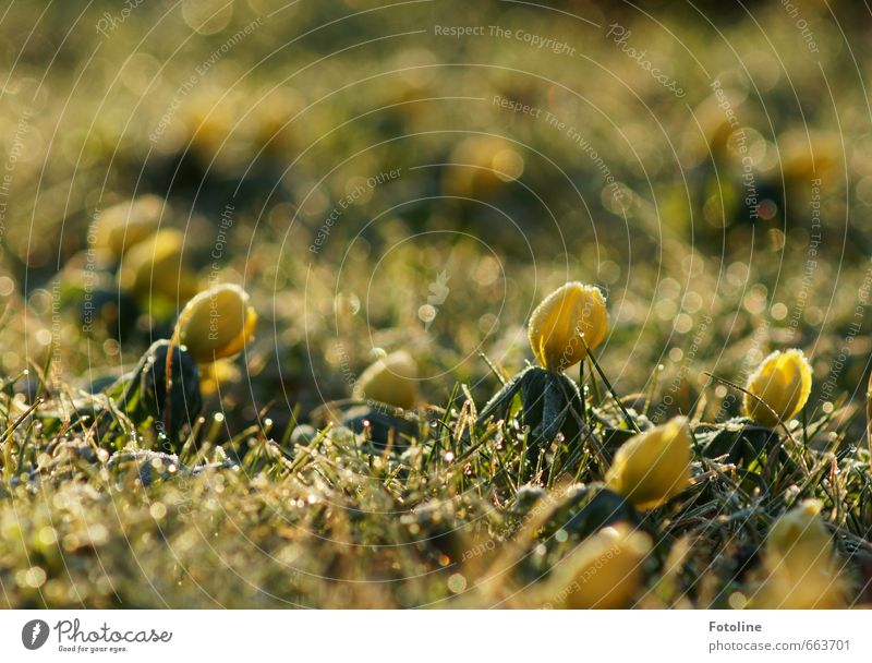 Nature Green Plant Landscape Flower Cold Yellow Environment Meadow Grass Spring Blossom Bright Garden Ice Park