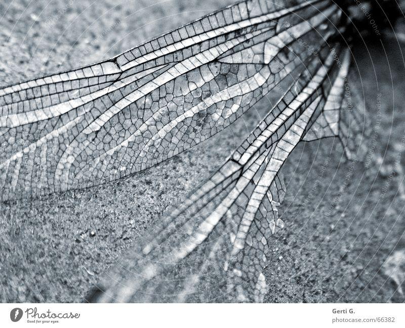 Animal Death Aviation Broken Wing Delicate Insect Decline Broken Transparent Easy Destruction Smooth Fine Delicate Sensitive