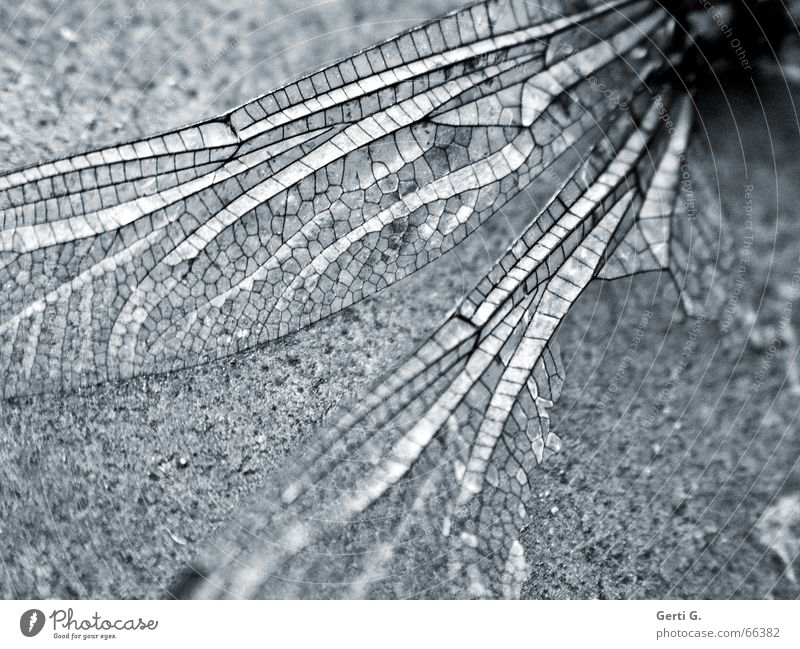 broken wings are 4 .... Insect Dragonfly Broken Destruction Pattern Sensitive Fine Delicate Fragrant Easy Mosaic Transparent Crash landing Animal