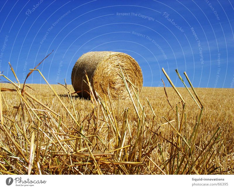 round bales Roll of straw Bale of straw Straw Field Sky Blade of grass Blue Gold