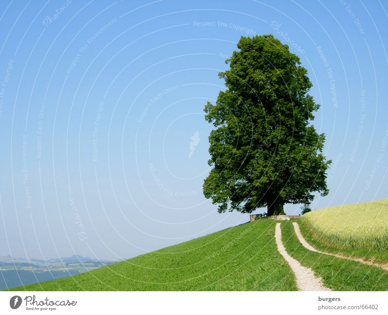 power station Tree Individual Large Loneliness Green Deciduous tree Hill Field Horizon Vantage point Calm Sublime Exterior shot Landscape Sky Blue