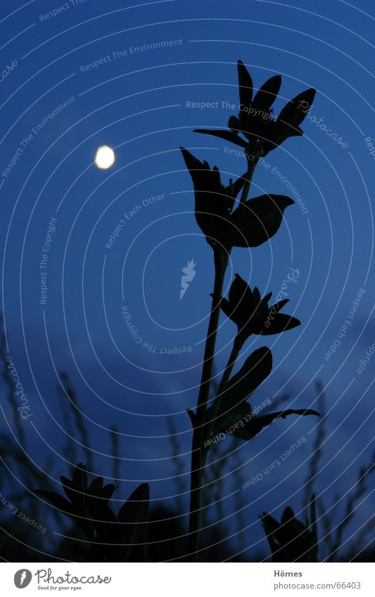 moonflower Meadow Black Back-light Grass Night Twilight Calm Serene Longing Anomaly Long exposure Moon Bright Sky Blue Freedom Size effort Nature